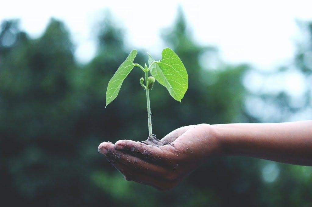 fortalecimento da marca com tecnologias sustentáveis